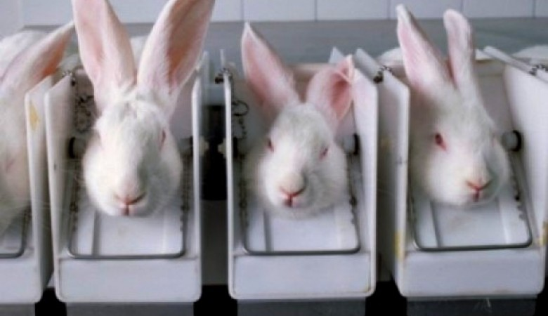 essay on animal testing for cosmetics Persuasive essay animal testing for cosmetics question: should cosmetic companies be able to continue cosmetic testing on animals discussion of.